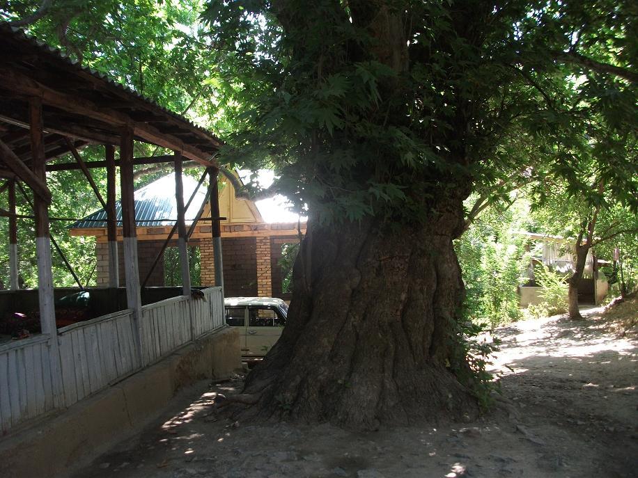 Burchi-mulla