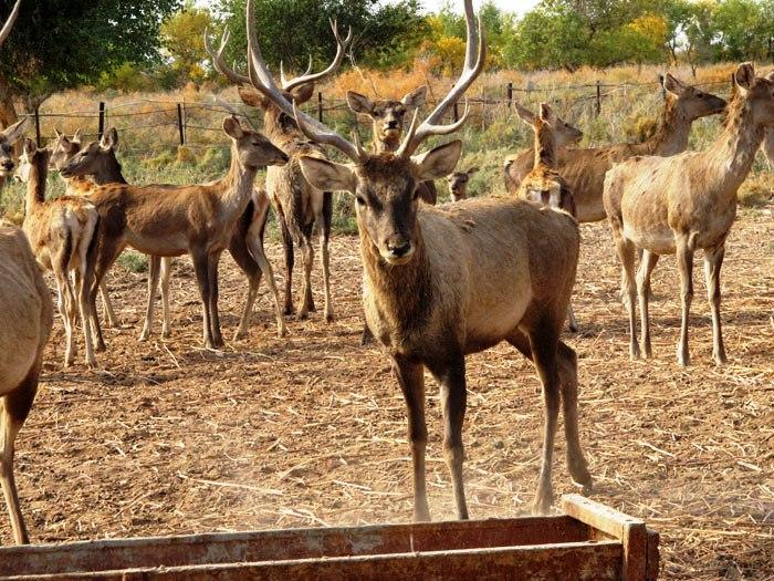 Природные заповедники Узбекистана Природа Узбекистана Это  Бадай Тугай равнинно тугайный заповедник
