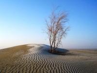Природа Туркменистана