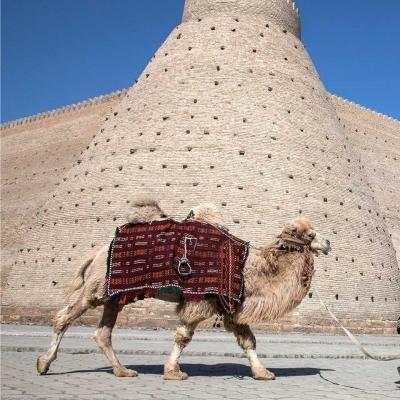 4-tägige Tour nach Usbekistan