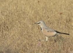 Birdwatching tour in Uzbekistan' provinces