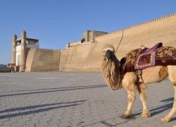 Samarkand & Bukhara short tour