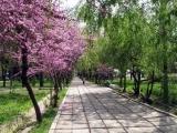 Benvenuti in Uzbekistan! Tour da Milano